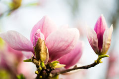 Beautiful spring nature Royalty Free Stock Photography