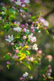 Beautiful spring nature of blooming trees. Vertical image royalty free stock photography
