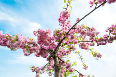 Beautiful spring nature Royalty Free Stock Image