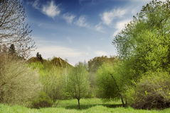 Beautiful spring nature landscape Stock Images