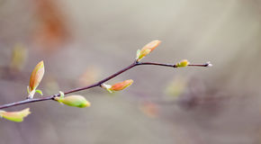 Free Beautiful Spring Nature Landscape, Tree Twig With Colorful Red Green Leaves. Macro View Selective Focus. Stock Photos - 91817703