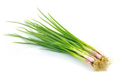 Beautiful spring onions Royalty Free Stock Photos