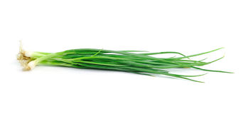 Beautiful spring onions on  white background. Stock Images