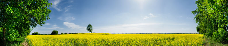 Beautiful spring panoramic Stock Photos