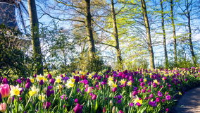 Beautiful spring park covered by tulips. Panoramic view stock video