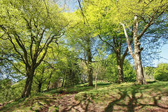 Beautiful Spring park in Scotland Royalty Free Stock Image