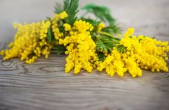 Beautiful spring photo. Yellow mimosa on a wooden background. Background for your text. royalty free stock photo