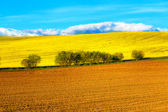 Beautiful spring plowed field and green meadow and tree. Royalty Free Stock Image
