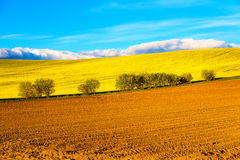 Beautiful spring plowed field and green meadow and tree. Stock Photo