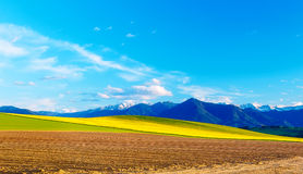 Beautiful spring plowed field and green and yellow meadow. Mountain in background. Beautiful spring plowed field and green and yellow meadow. Mountain in Stock Images