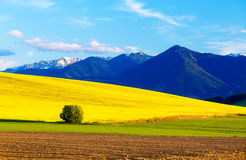 Beautiful spring plowed field and green and yellow meadow. Mountain in background. Beautiful spring plowed field and green and yellow meadow. Mountain in Stock Photography
