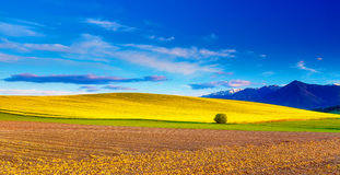 Beautiful spring plowed field and green and yellow meadow. Mountain in background. Beautiful spring plowed field and green and yellow meadow. Mountain in Stock Photo