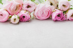 Beautiful spring Ranunculus flowers on gray stone table. Floral border. Pastel color. Greeting card for Valentines or Womans Day. Empty space for text royalty free stock photography