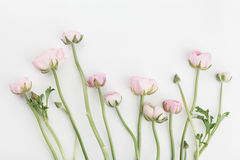 Beautiful spring Ranunculus flowers on white background from above. Floral border. Pastel color. Wedding mockup. Flat lay.