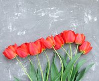 Beautiful spring red tulips Stock Photo