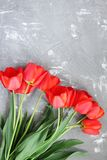 Beautiful spring red tulips Royalty Free Stock Photos