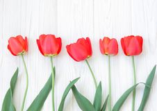 Beautiful spring red tulips Stock Photography