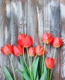 Beautiful spring red tulips Royalty Free Stock Photography