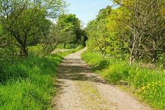 Beautiful spring road in the park Stock Photography