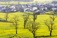 Beautiful spring rural landscape Stock Images