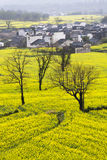 Beautiful spring rural landscape in China Royalty Free Stock Photography