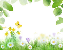 Beautiful spring scenery Stock Image