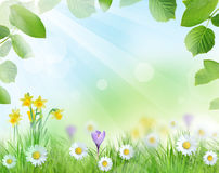 Beautiful spring scenery Royalty Free Stock Photo