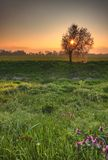 Beautiful spring scenery. With sun setting behind blossoming tree Royalty Free Stock Photo