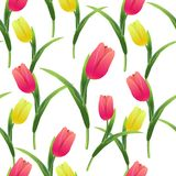 Tulips simless pattern card4-01. Beautiful spring seamless pattern with Yellow,red tulips.The flowers on a white background.Vector illustration.Print for gift Stock Photography