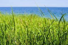 Beautiful spring seascape with green grass Stock Image