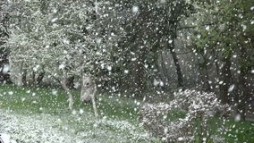 Beautiful spring snowfall in garden, slow motion stock footage