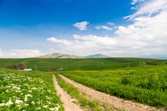 Beautiful spring and summer landscape. Mountain country road among green hills. Bright green grass. Beautiful spring and summer landscape. Mountain country road royalty free stock image
