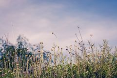 Beautiful spring or summer nature background with fresh grass.  royalty free stock photography