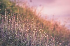 Beautiful spring or summer nature background with fresh grass.  stock images