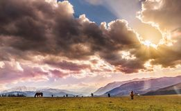 Horses gazing in the field. A beautiful spring sunset. There were about fifty horses gazing in the fields and the sun starts going down by creating amazing royalty free stock image
