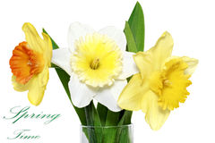 Beautiful spring  three flowers : yellow-white-orange narcissus Stock Photos