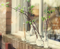 Beautiful spring tree branches in glass bottles on window. Royalty Free Stock Image
