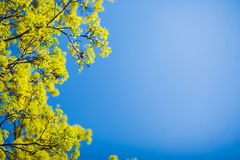 Beautiful spring tree Stock Images