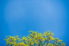 Beautiful spring tree Stock Photo