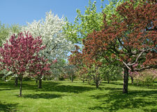 Beautiful spring trees in bloom Royalty Free Stock Photos