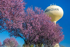 Beautiful spring trees and water tower Royalty Free Stock Image