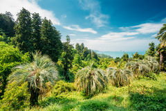 Beautiful Spring Tropical Garden Or Forest Woods. Nobody. Summer Stock Images