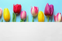 Beautiful spring tulip flowers and card on color background, top view. Space for text stock images