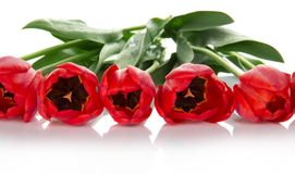 Beautiful spring tulips bunch Royalty Free Stock Images