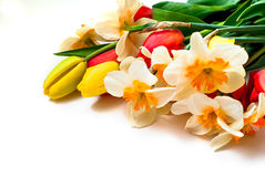 Beautiful spring tulips and daffodils stock images