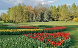 Beautiful spring tulips  in the park Stock Photography