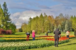Beautiful spring tulips - walk among the tulips in stormy day Stock Photos