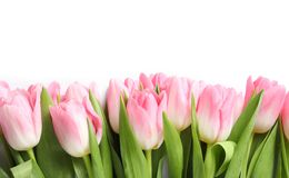 Beautiful spring tulips on white background, top view. International Women`s Day royalty free stock photography