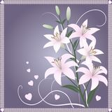 Beautiful spring wallpaper with lily flowers Royalty Free Stock Images