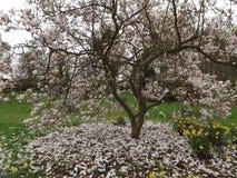 beautiful spring woman 库存图片